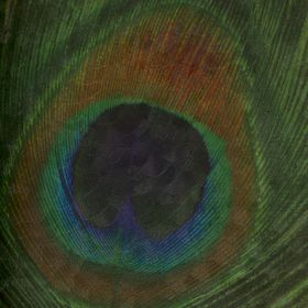 Papel pintado Pluma 1