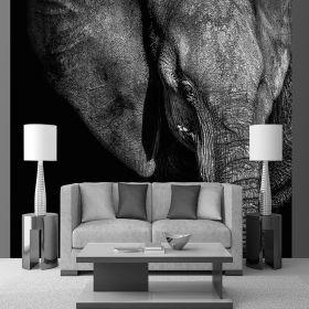 Fotomurales Elefante